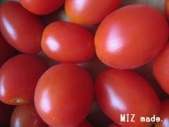 爺ちゃん家のミニトマト2