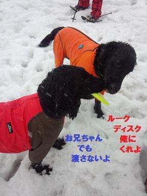2014126naokikitaru (2)