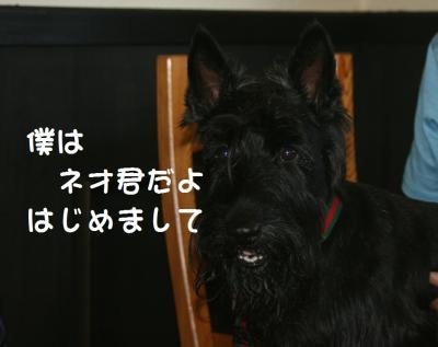 a_20100719205914.jpg