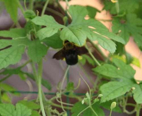 コンデジ ハチ 2