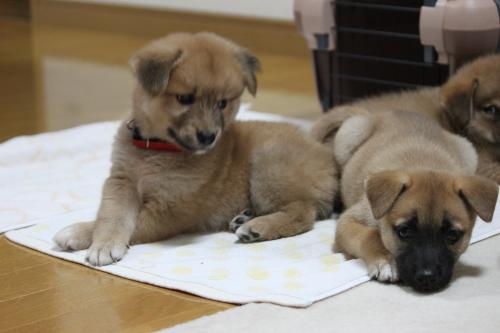 保護犬 3