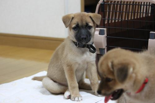 保護犬 女の子 1