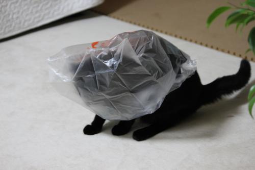 袋遊び 2