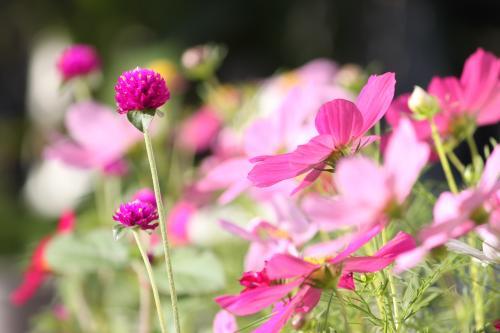 庭の花 6