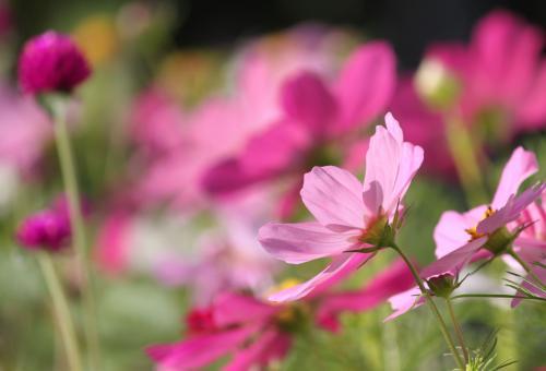 庭の花 5
