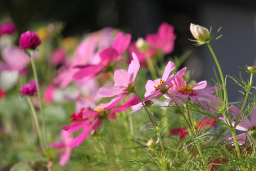 庭の花 4