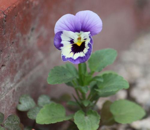庭の花 7