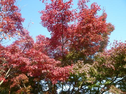 秋さがし 2