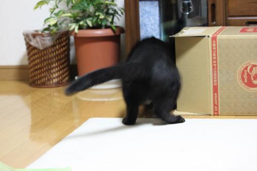 箱遊び 5