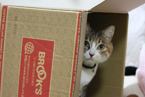 モコの箱 4