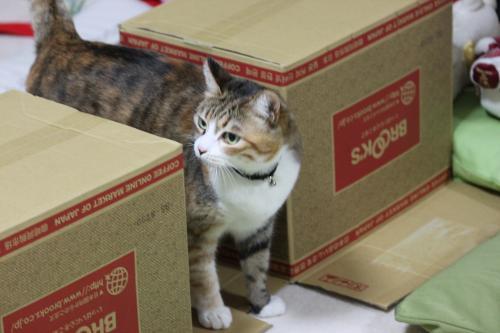 モコの箱 3
