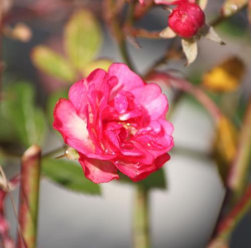 花が咲いた 3