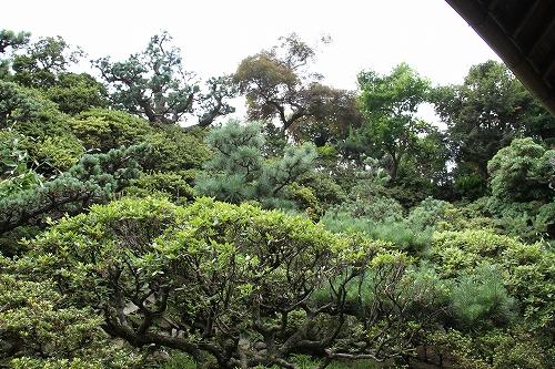 我が家の庭木9