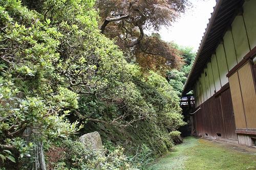 我が家の庭木8
