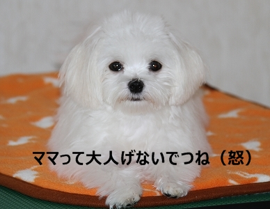 涙顔アリン1-1