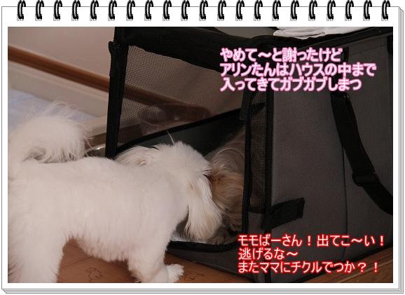 モモちゃんの苦悩5