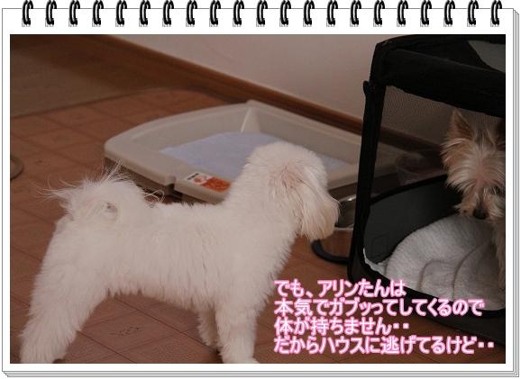 モモちゃんの苦悩4