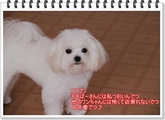 モモちゃんの苦悩7