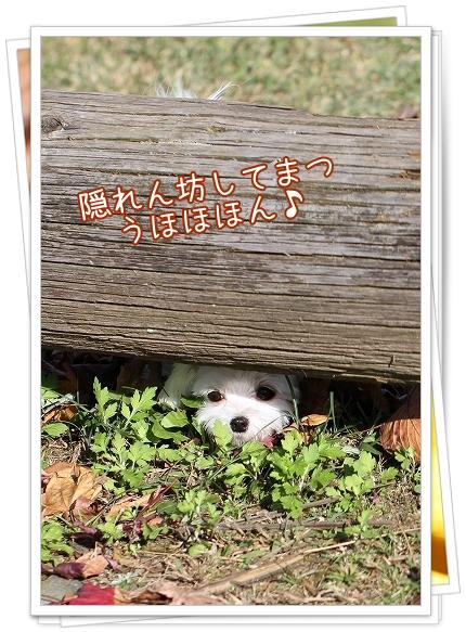 池田公園2011-5