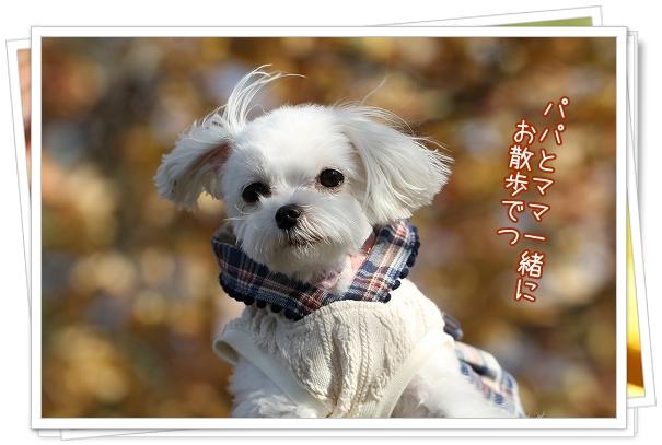 池田公園2011-3