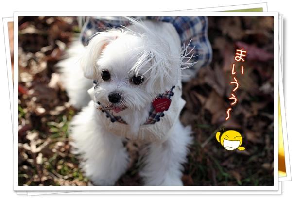池田公園2011-10
