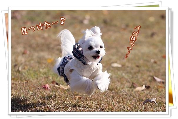 池田公園2011-8