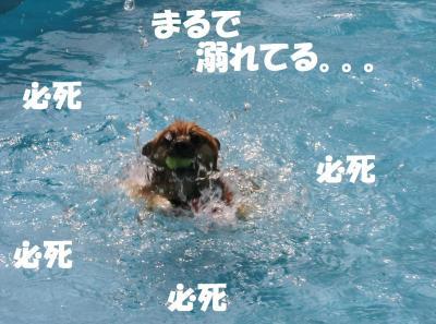 027繝シ繧ウ繝斐・繧ウ繝。繝ウ繝・convert_20130903221325