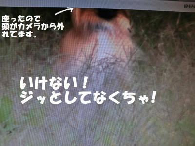 013繝シ繧ウ繝。繝ウ繝・convert_20131105222411