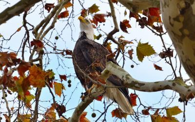 ハゲタカ 鳥 猛禽類 木 自然 動物