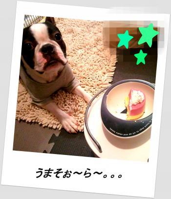 pol-home2_convert_20111128012053.jpg