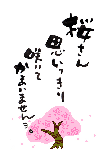 桜さん思いっきり咲いてかまいませんよ