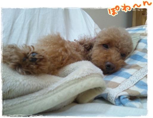 2011_1102sumaho0063.jpg