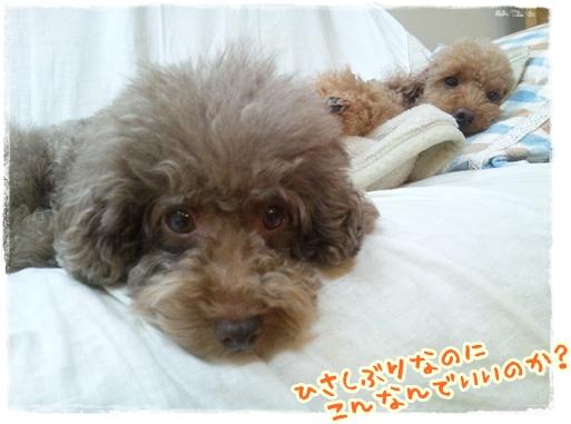 2011_1102sumaho0064.jpg