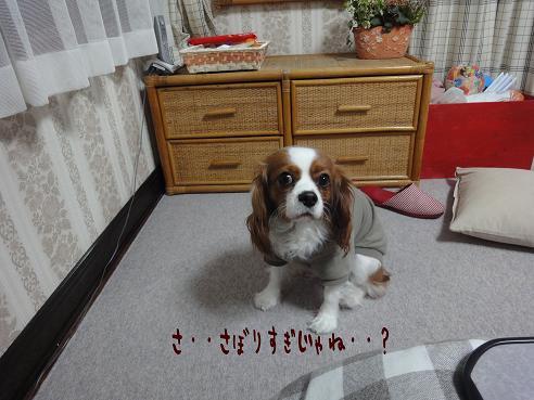 004_20101218230047.jpg
