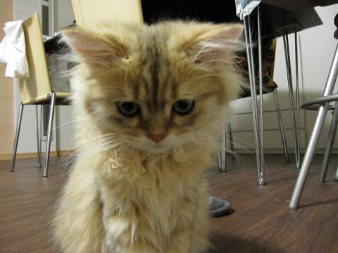 20100921001.猫洗い