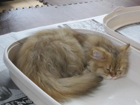 20100921004.猫洗い