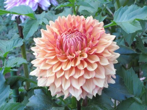 20101011001神代植物公園