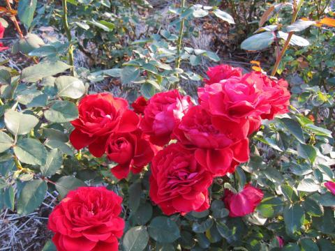 20101011002神代植物公園