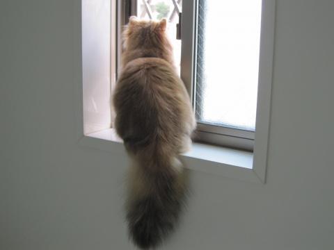 20101017001ネコ洗い