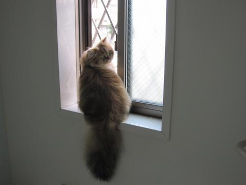 20101017002ネコ洗い