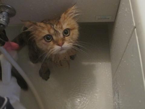 20101017004ネコ洗い