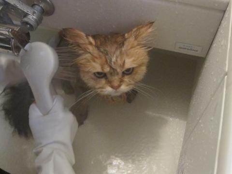 20101017005ネコ洗い