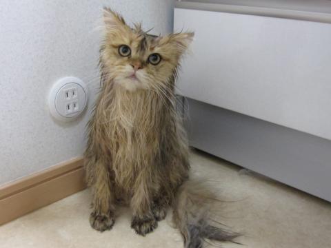 20101017006ネコ洗い