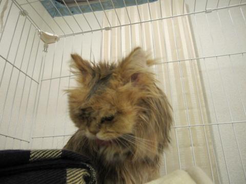 20101017008ネコ洗い