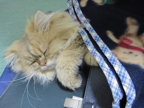 20101017011ネコ洗い