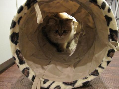 20101024001ハンター猫