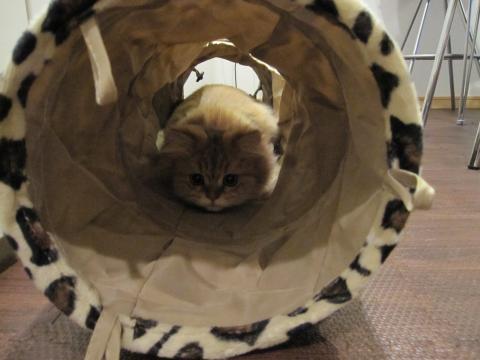 20101024002ハンター猫