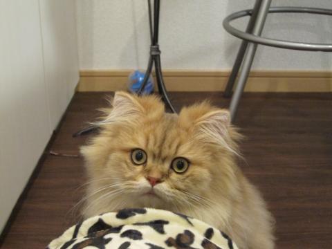 20101025001ハンター猫