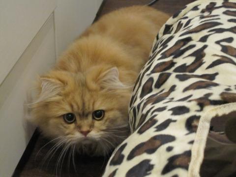20101025003ハンター猫