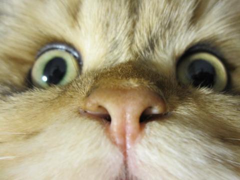 20101114002驚く猫